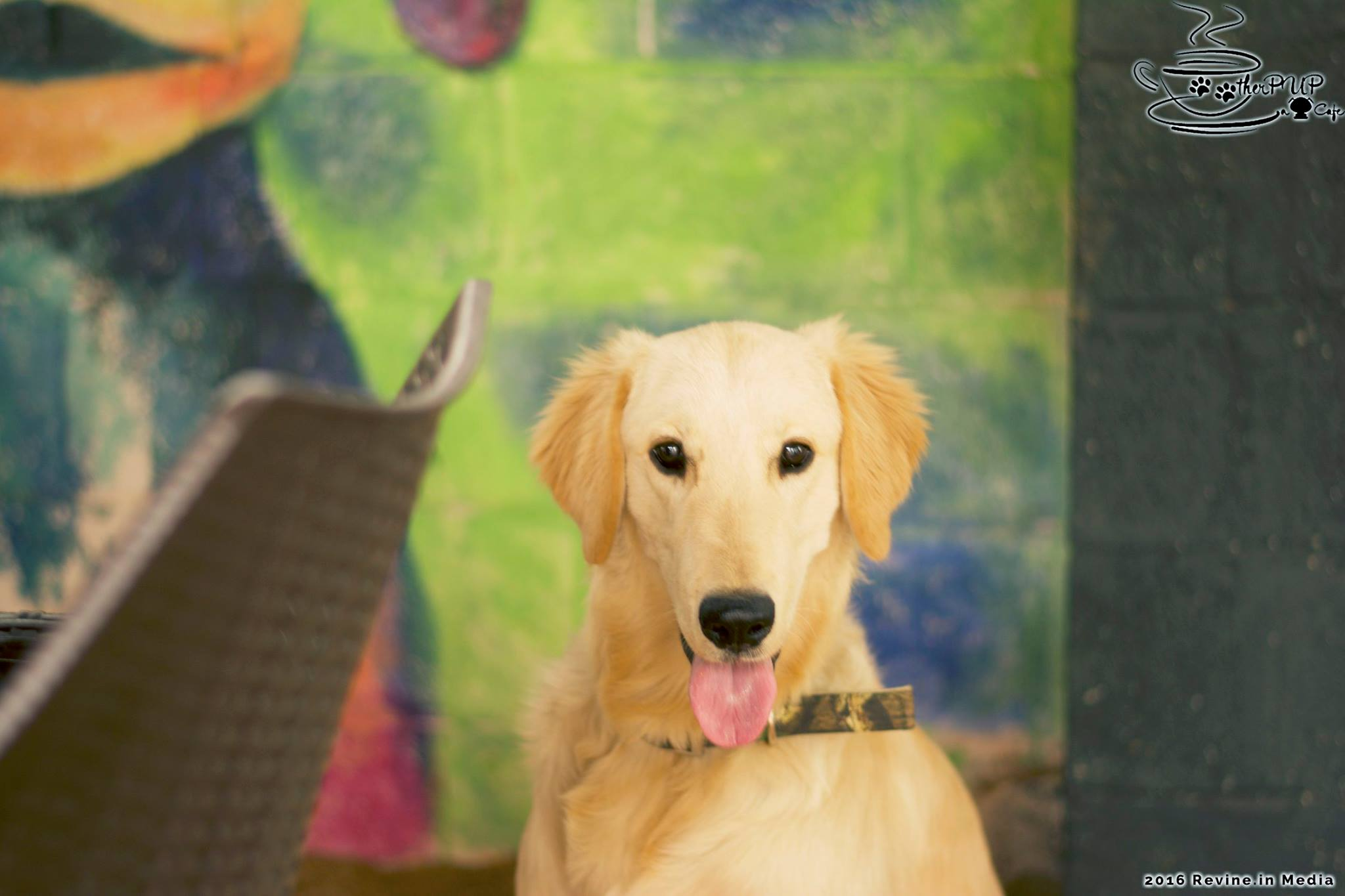 Therpup – The Dog Cafe